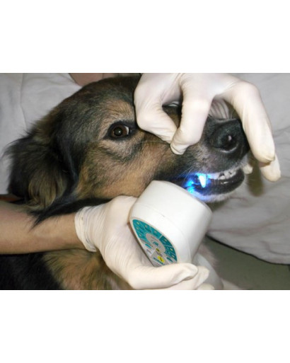 Rikta VET vererinary therapy laser  for dogs cats horses  + optical  Nozzles KON 1 Full english version